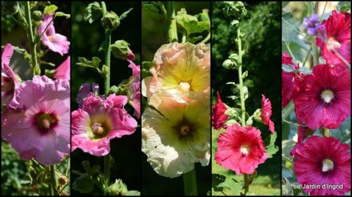2014-06-25 chez Fabien,le canal,jardin,hémérocalles,le souci,potager.jpg