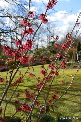 jardin ,semis,marron 029.JPG