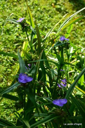 fleurs bleues,hortensia bleu,moi bébé 022.JPG