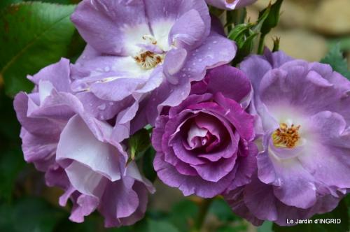 Cadouin,ancolies,roses,pollen,osier,photos Fabien,coquelicots 028.JPG