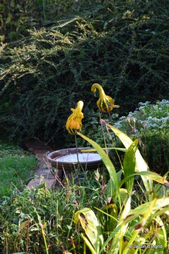 jardin automne,Arya avec Nicky 116.JPG