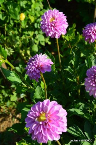 dahlias,jardin,puces st Avit Seigneur,Paniers Issigeac,Romane 056.JPG