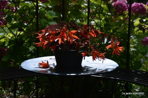 jachère,couleur,bouquet 025.JPG