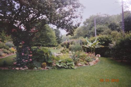 jacinthe,oiseaux,gouttelettes,vieilles photos,dégats 056.JPG