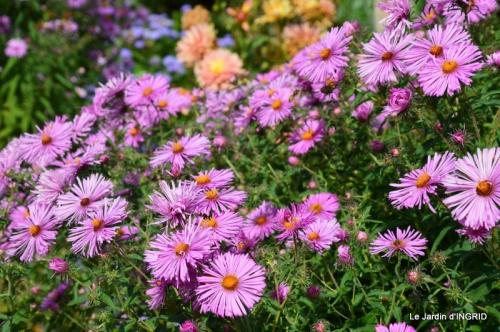 jardin ,bouquet 084.JPG