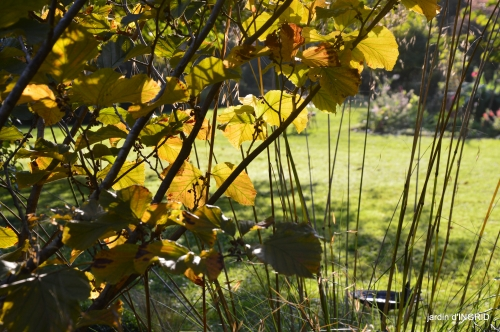 Jardin à l'automne 080.JPG