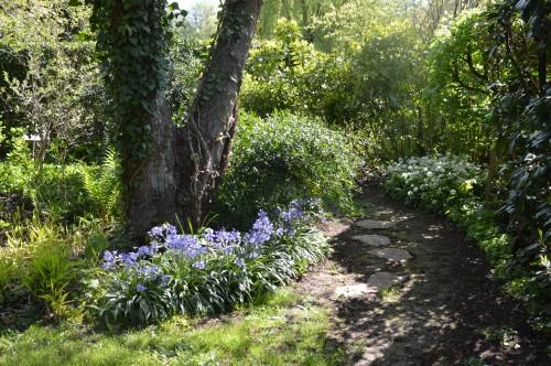 iris,arbre de judée,pivoine,Arya,viburnum,pts plants,cytise,akéb 042.JPG