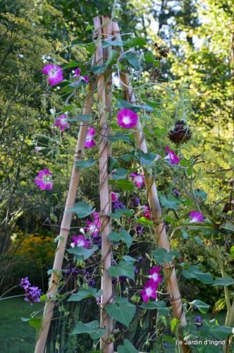 jardin,les filles,fleurs Peyrichou 039.JPG