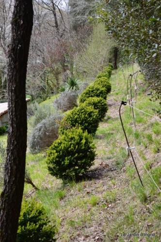 pruniers,jacinthes,jonquilles 001.JPG