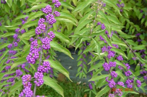 automne,troc2012,Mouleydier,serre 037.JPG
