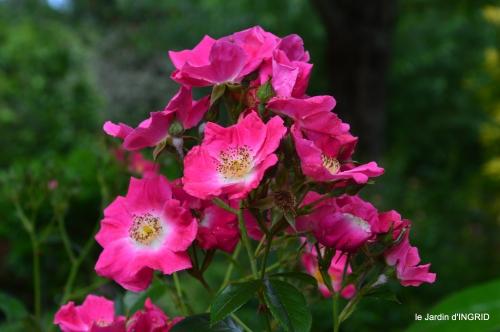 jardin,portes ouvertes,Julie 089.JPG