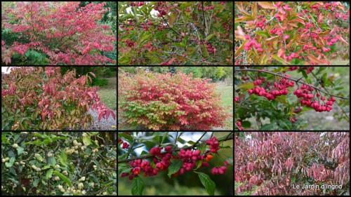 2014-10-06 jardin,St Avit Seigneur brocante,Neuvic fête des plantes1.jpg