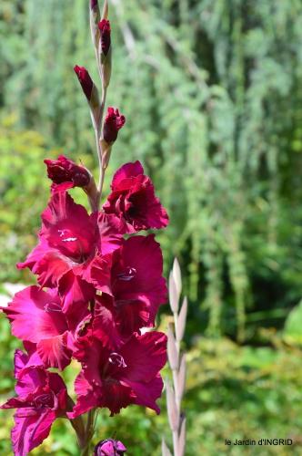 jardin,papillons,Cadouin,légumes,Sophie, 075.JPG