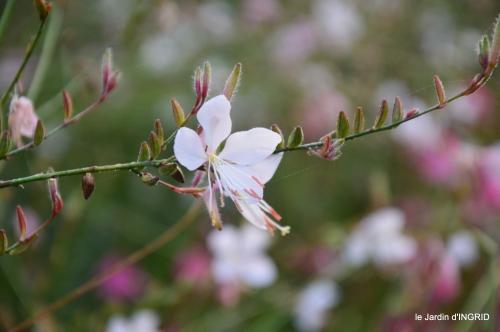 Fleurettes,Dordogne,jardin 122.JPG