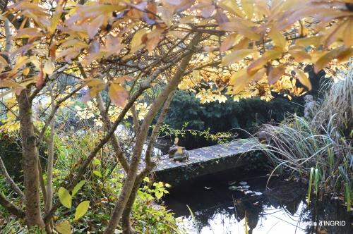 merles,pluie,jardin,automne 060.JPG