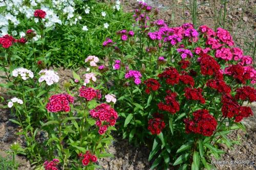 fête de la fraise Vergt,roses jardin 126.JPG