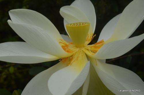 orage,puces,bouquet,Anniv.Ines,Brantome,Jardins d'eau 240.JPG
