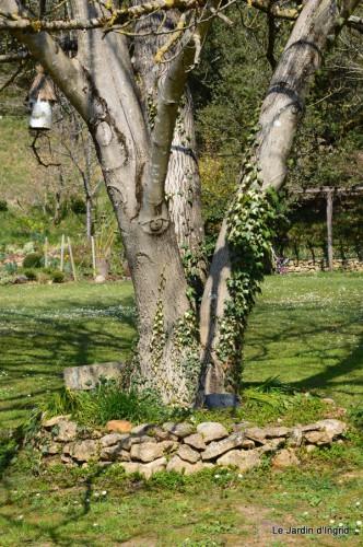 araignée,vues jardin,cygnes,insecte 052.JPG