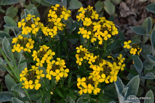 jardin printemps 116.JPG