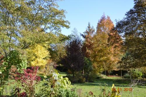 petit érable,le canal et lejardin àl'automne 027.JPG
