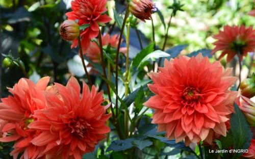confiture,bouquet,petit jardin 017.JPG