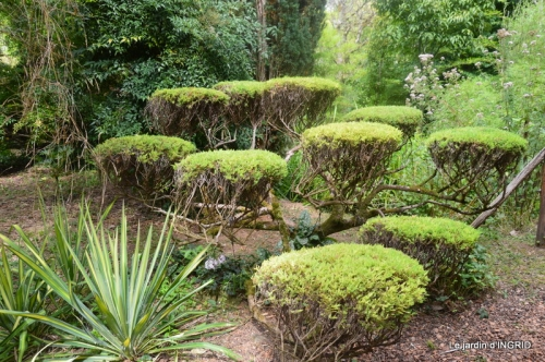 jardin de planbuisson
