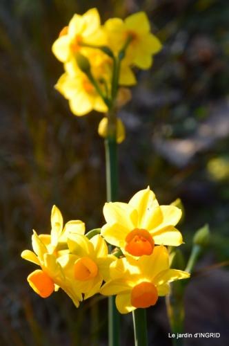 fleurs de janvier ,coucher de soleil,compo de tulipes 036.JPG