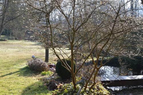 crocus,nichoirs,jonquilles,jardin,coucher du soleil 015.JPG