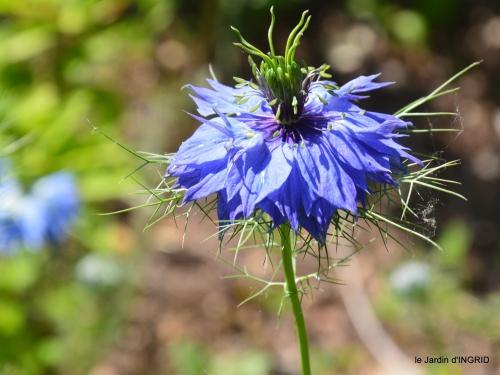 cygnes,Sophie,jardin en mai 019.JPG