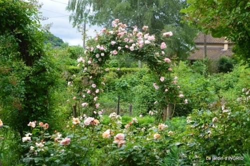 roses,poule d'eau,bébés cygnes, 014.JPG