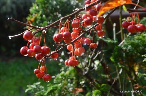 troc,automne,serre 057.JPG