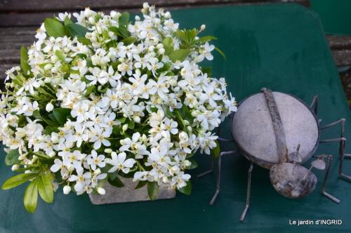geais,jardin,printemps 098.JPG