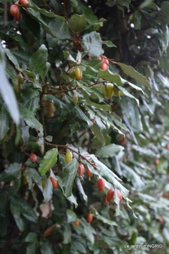 oiseaux cacaouettes gouttes,petits fruits 077.JPG