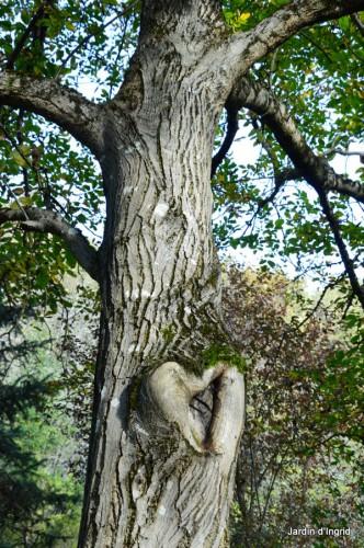 troncs,automne,vieilles photos 072.JPG