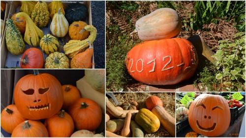 2012-10-25 automne,troc2012,Mouleydier,serre1.jpg