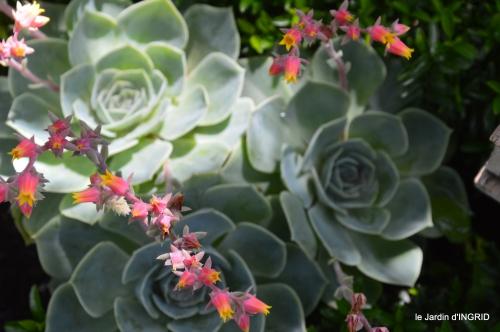 jardin,papillons,Cadouin,légumes,Sophie, 085.JPG