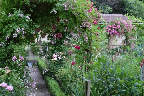 jardin,potager,roses,sauges 005.JPG
