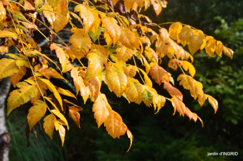 couleurs d'automne,bouquet,lune 084.JPG