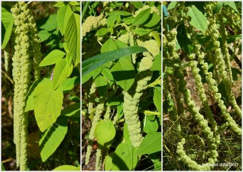 2016-08-21 jardin,coeur des fleurs,potager,2.jpg