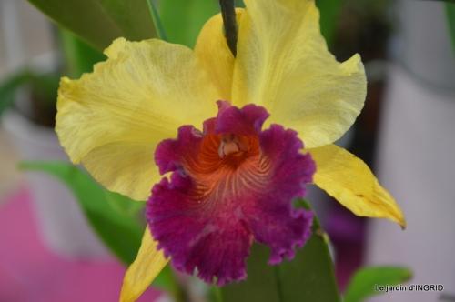 canal,jardin,Mombazillac,bonzais,orchidées 190.JPG