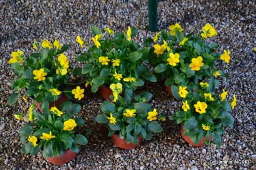 jardin Mme Perichou,grandes fleurs,bouquet,jardin 145.JPG
