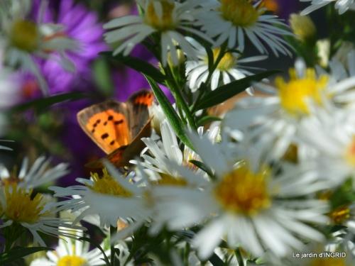 papillons,couleurs d'automne,Bernadette,pluie 025.JPG