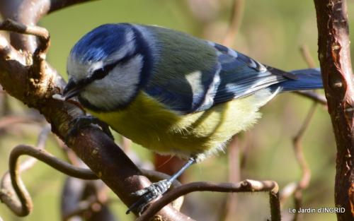 les oiseaux ,2 partie 023.JPG