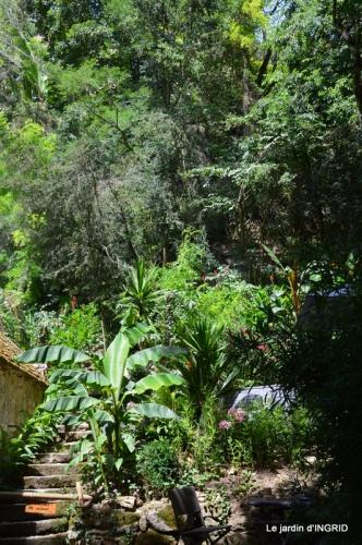 bambous Roque Gageac,jardin,bouquet 133.JPG
