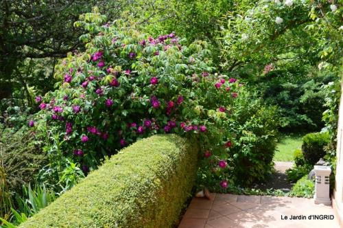 Cadouin,ancolies,roses,pollen,osier,photos Fabien,coquelicots 199.JPG