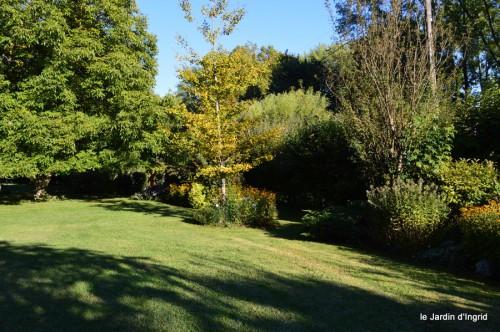jardin,asters,fleurs blanches,chatte,rosiers roses 034.JPG