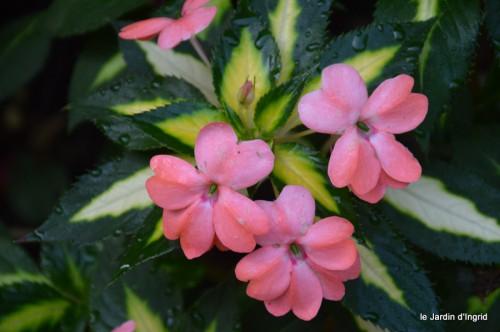 jardin,fruits,Caro,papillons,manthe religieuse,Lalinde 014.JPG