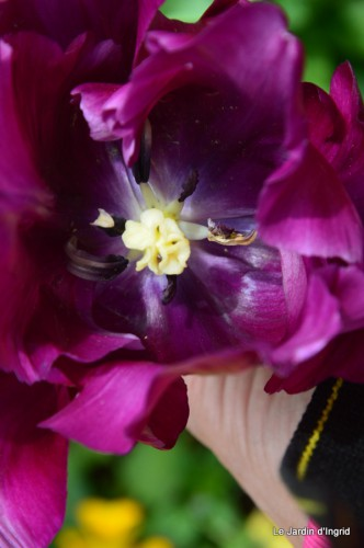 jardin,roses,cabane 067.JPG