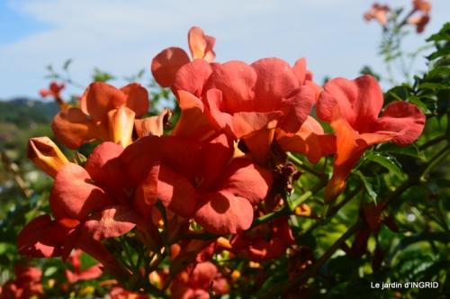 bambous Roque Gageac,jardin,bouquet 228.jpg