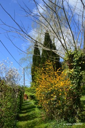tulipes,Julie,golf,jardin 176.JPG